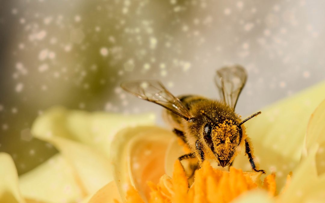 What's all the Buzz about Bees and the Environment?