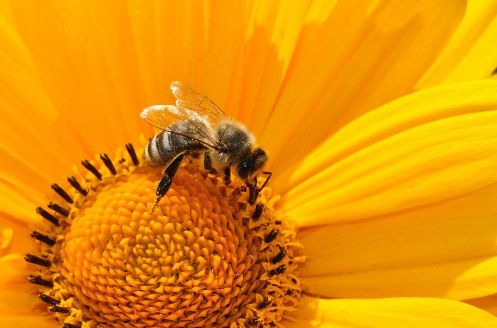 Snives Hives